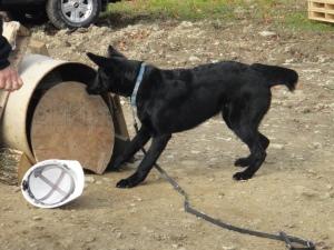 Bark Barrell