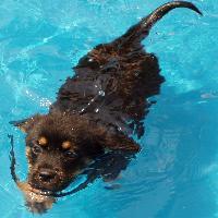 baby anna swim