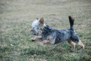 kaizy mid run (2)