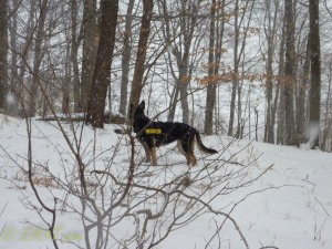 december winter dogs-11