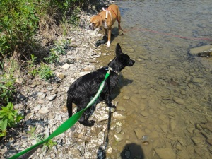 Young Eme and Kendal exploring the chenango river