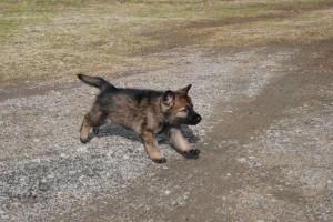 Freddie sprinting
