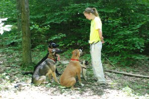 Some of the pack on an off leash hike in 2011