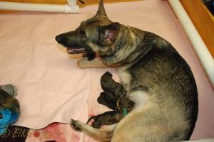 raina puppies (17 of 51)