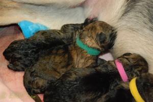 raina puppies (24 of 51)