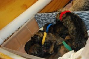raina puppies (41 of 51)