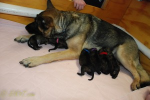raina puppies (42 of 51)