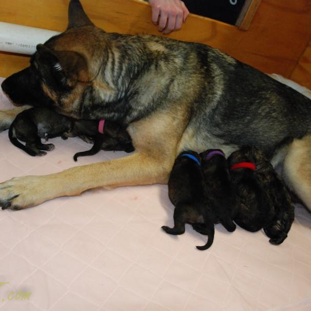 raina puppies (42 of 51)