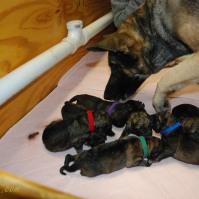 raina puppies (44 of 51)