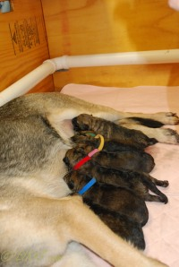 raina puppies (47 of 51)