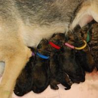 raina puppies (49 of 51)