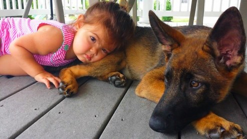Averi in his new home in PA as an HRD K9