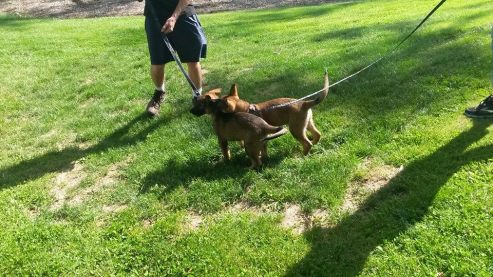 Two pups at the park