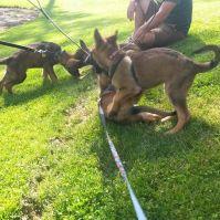 4 pups reunited