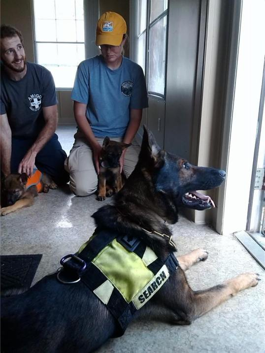 K9 Soren, dad, waiting with pups during filming for Animal Planet